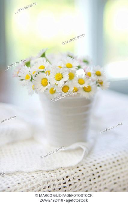 Summer season, the time for the collection of small daisy field