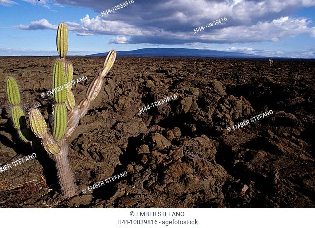 Equador, Galapagos Islands, Isabela Island, landscape, rocks, volcanic, cacti, cactus, rough surface, rock, rocky, cra