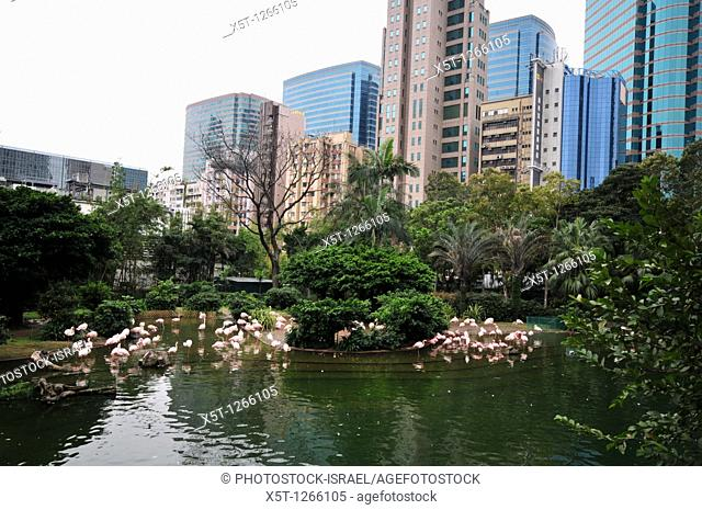 Asia, Southeast, People's Republic of China, Hong Kong  Flamingoes in Kowloon Park, Tsim Sha Tsui