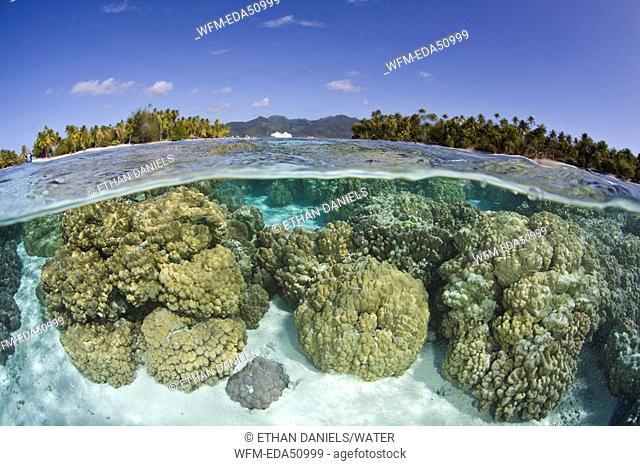 Corals of French Polynesia, Porites sp., Moorea, French Polynesia