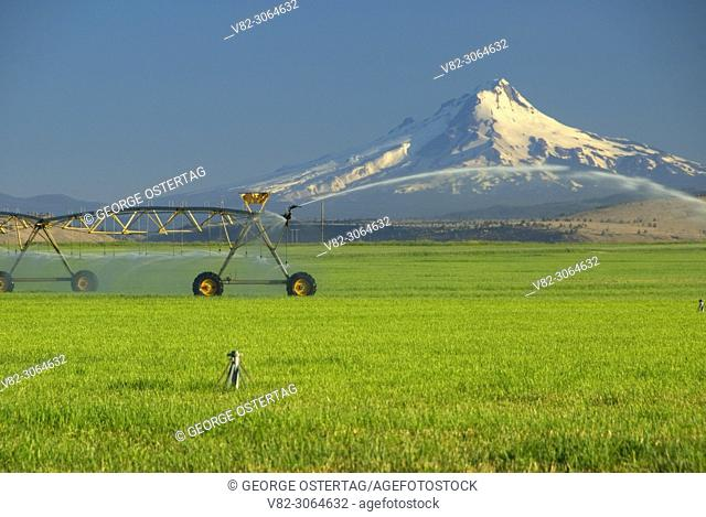 Agency Plains field with irrigation pipe to Mt Hood, Jefferson County, Oregon