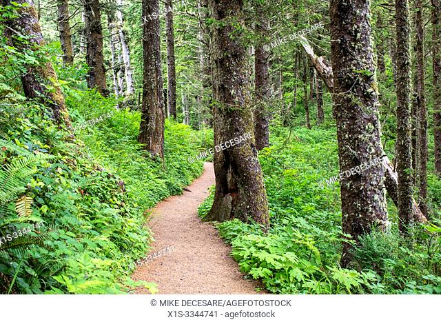 The Cape Lookout Trail aloing the Oregon coast winds its way through a dense forest that stretches for miles