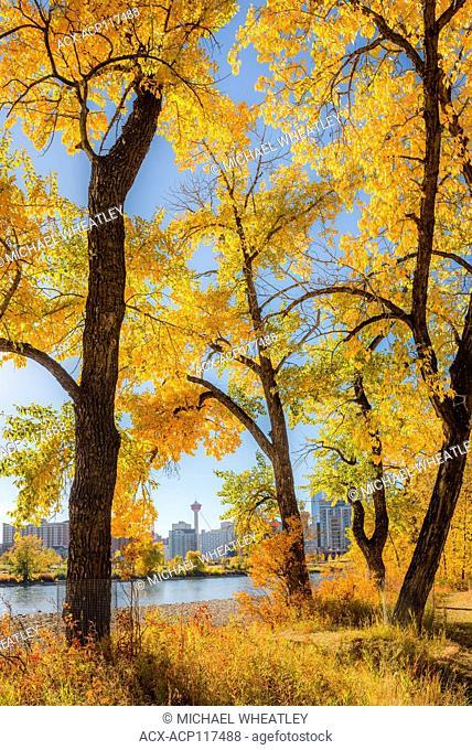 Fall colour, Saint Patricks Island, Calgary, Alberta, Canada
