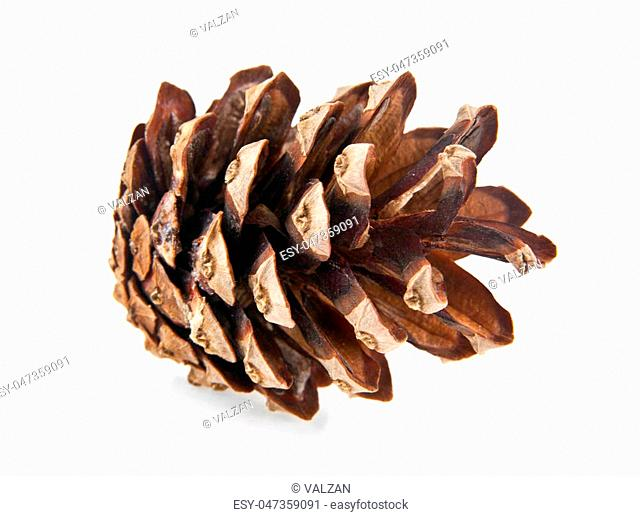 cone is isolated on a white background