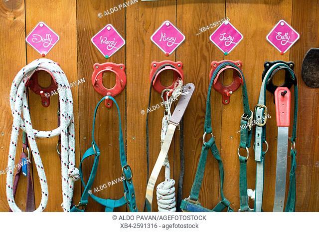 Horses' harnesses, Borgo Valsugana, Italy