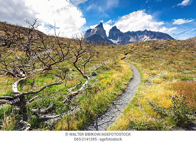 Chile, Magallanes Region, Torres del Paine National Park, Mirador Cuernos, fire damaged trees