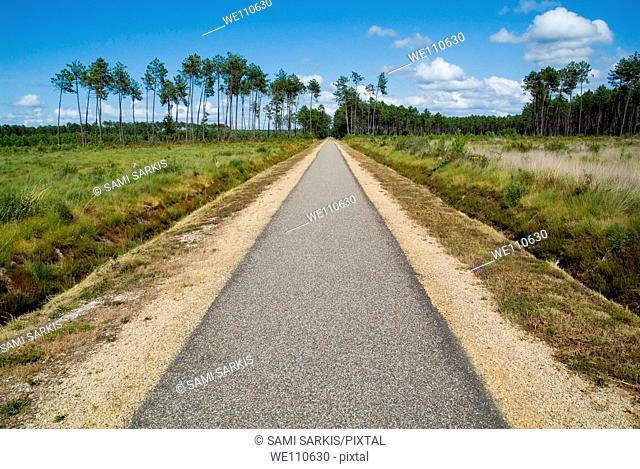 Bicycle track passing through the Landes forest, France