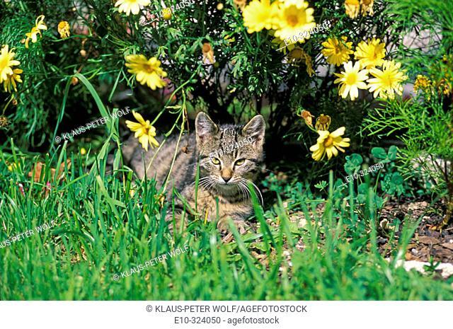 Grey-white kitten under flowers