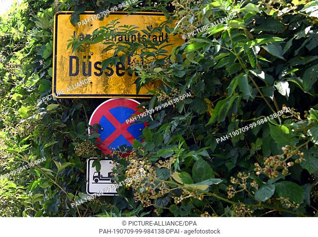 01 July 2019, North Rhine-Westphalia, Duesseldorf: An overgrown place and traffic sign, hardly visible for the driver. Photo: Horst Ossinger/dpa