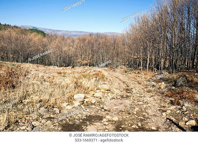 Road to the Lobera  Navaluenga  Ávila  Castilla León  Spain