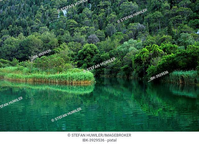 Krka river with reeds, Krka National Park, Skradin, Sibenik-Knin, Dalmatia, Croatia