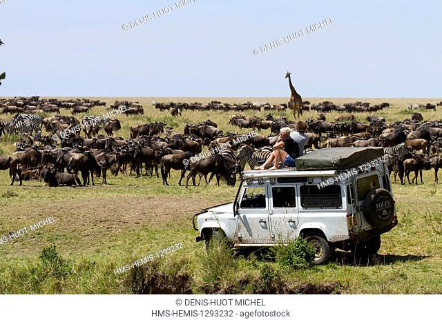Kenya, Masai Mara national reserve, herd of wildebeest (Connochaetes taurinus), and tourists