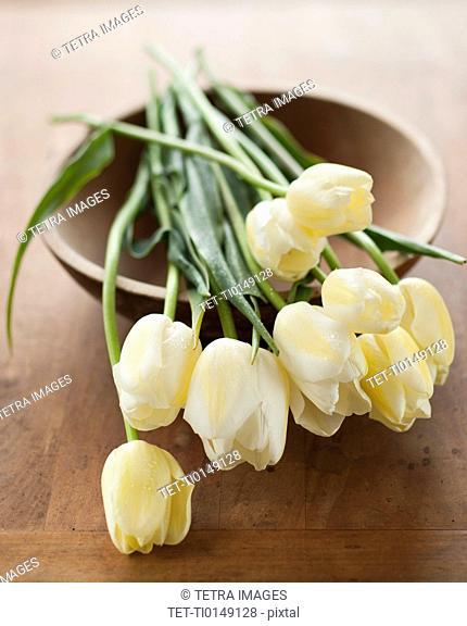 Tulips on bowl