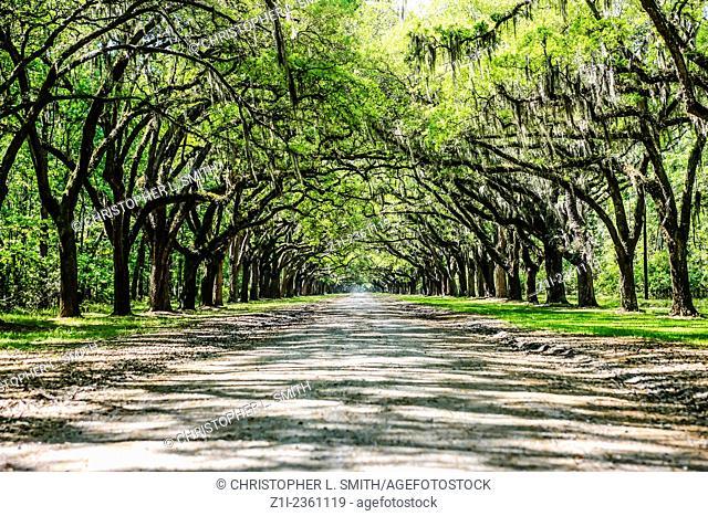 The Live Oak Avenue at Wormslow Plantation nr Savannah GA