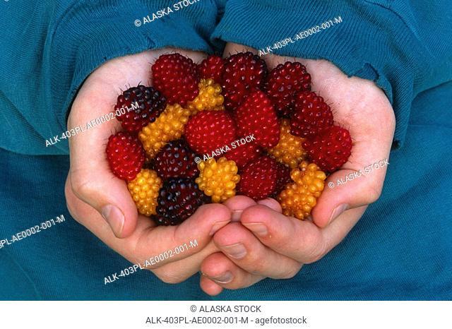 Closeup of woman holding handfull of Salmon Berries Juneau Alaska Southeast Summer