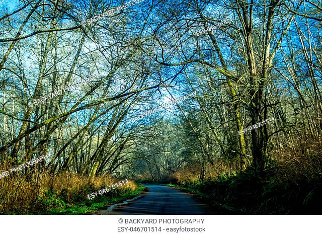 Tree-Lined Road in Northern California