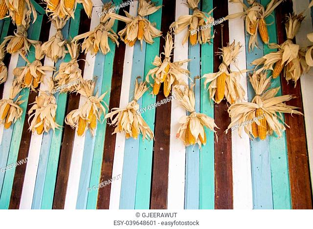 A lot of dry corns on wooden wall2