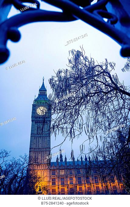 Big Ben, al atardecer con un arbol en primer plano visto a traves de una verja. Parliament, Westminster, Londres, UK, Europa