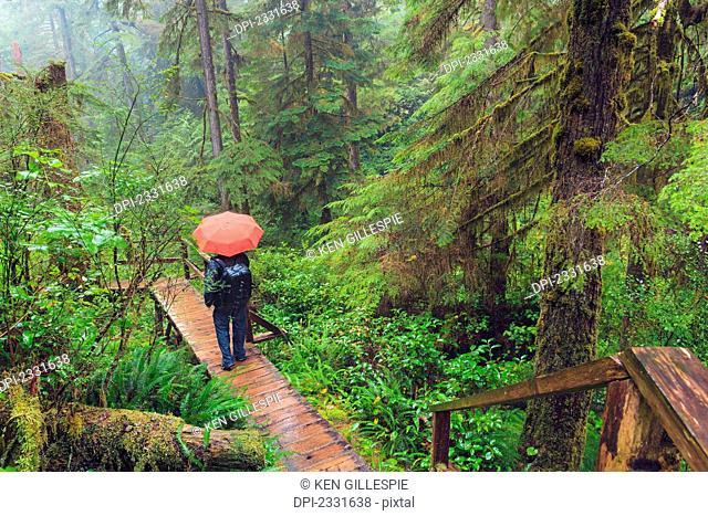 Hiker in the rain pacific rim national park;Vancouver island british columbia canada