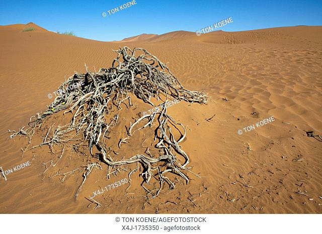 sossusvlei dead valley in Namib-Naukluft Park, Namibia