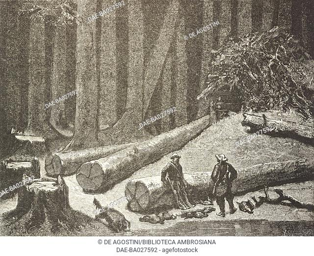 Camp in a pine forest (Pinus australis, or P. palustris), Florida, United States of America, drawing by Alphonse de Neuville (1835-1885) from a sketch by...
