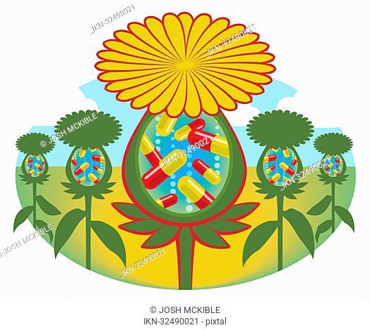 Capsules growing inside flowers