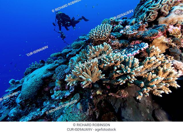 Underwater photographer photographing coral reef at Palmerston Atoll, Cook Islands