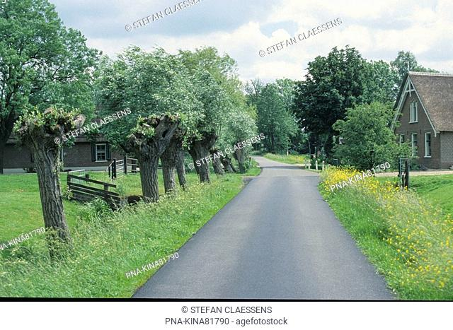 Willow, Pollard-willow Salix alba - Vlist, Krimpenerwaard, South Holland, The Netherlands, Holland, Europe