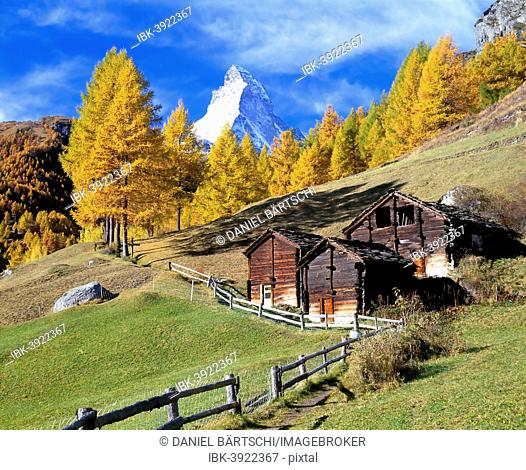 Wooden huts in front of larch trees with autumnal foliage and Mt Matterhorn, near Zermatt, Canton of Valais, Switzerland