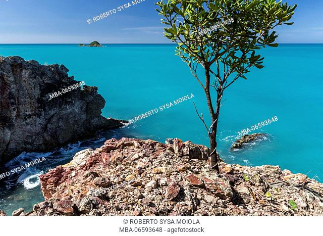 Cliffs and tree overlook the turquoise caribbean sea Spearn Bay Antigua and Barbuda Leeward Islands West Indies