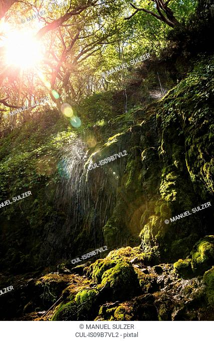 Waterfall splashing on moss in sunlit forest, Coyhaique National Reserve, Coyhaique Province, Chile