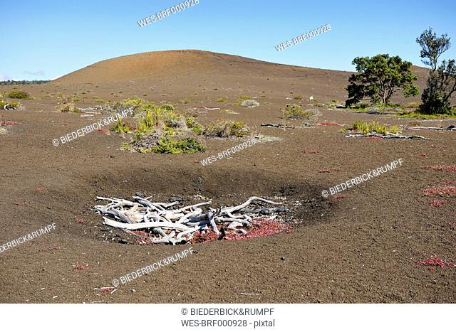 USA, Hawaii, Big Island, Volcanoes National Park, dead trees at Kilauea Iki crater