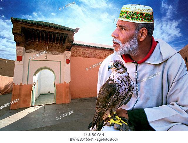 Moroccan falconer, Morocco