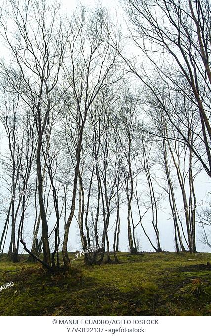 Trees in foggy golf course beside Asador Horma Ondo. Larrabetzu, Biscay, Basque Country, Spain