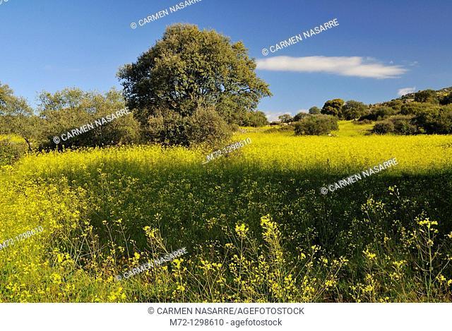 Meadow, Cuenca Alta del Manzanares Regional Park, Madrid, Spain