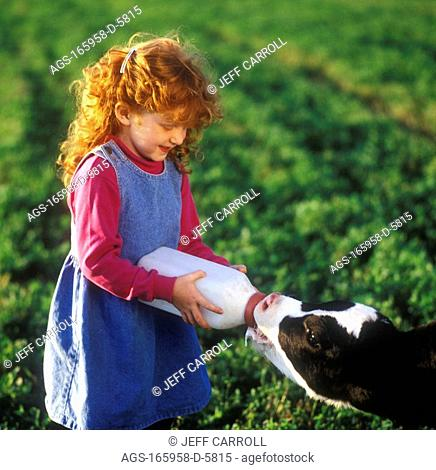 Agriculture - A young redheaded farm girl bottle feeds a Holstein dairy calf on a pasture of alfalfa / Canada - Ontario