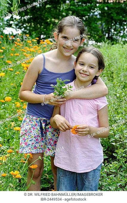 Girls in a meadow of marigolds, Kräuter-Erlebnis-Park herb theme park, Bad Heilbrunn, Loisachtal, Tölzer Land, Upper Bavaria, Germany, Europe