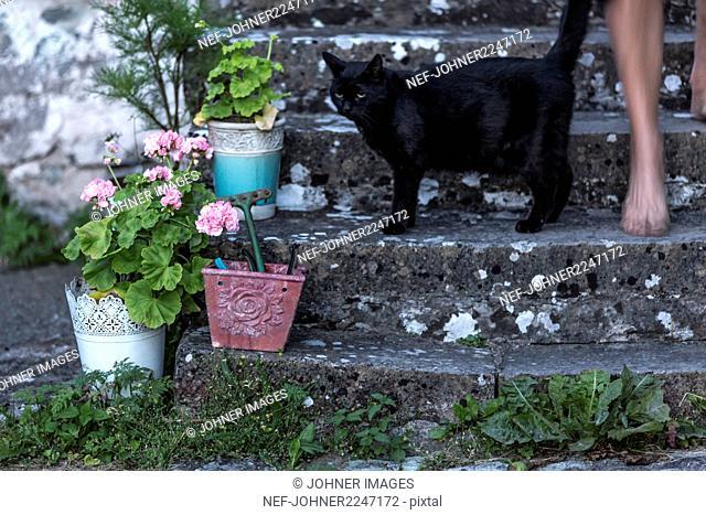 Cat on stone steps