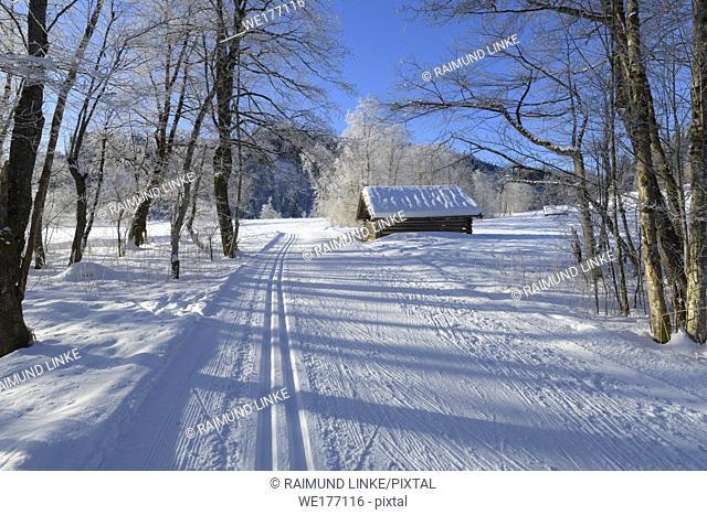 Cross country skiing track in winter landscape near lake Barmsee, Krün, Garmisch-Partenkirchen Upper Bavaria, Bavaria, Germany, European Alps