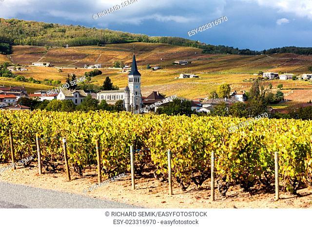Chenas with vineyard, Beaujolais, Rhone-Alpes, France