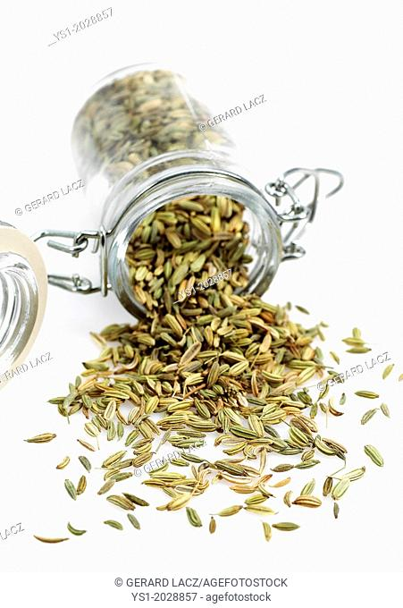 Seeds of Fennel, foeniculum vulgare against White Background