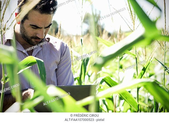 Researcher using laptop computer while collecting data in cornfield