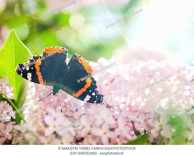 Batterfly on the lilac. Space for text