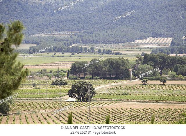 Spring vineyards Fontanars dels Alforins Valencian community Spain