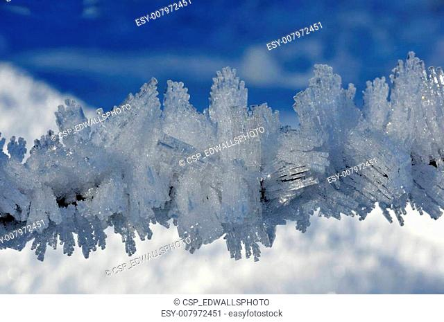 Fine ice crystals on a small branch