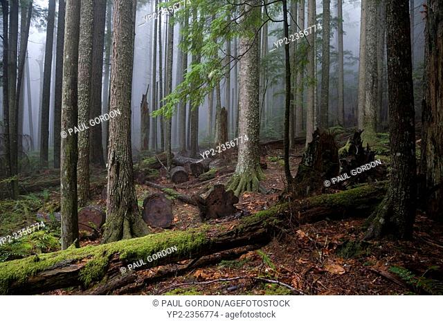 Forest View from Mount Si Trail, Cascade Mountains, Washington State