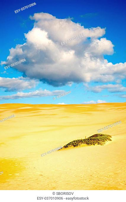 Sand dunes of pismo beach, California