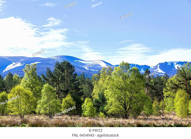 View from campground near Loch Morlich to Cairngorms, Scotland, UK