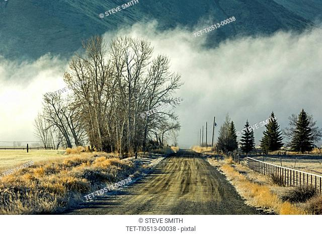 Road, trees, and fog in Picabo, Idaho