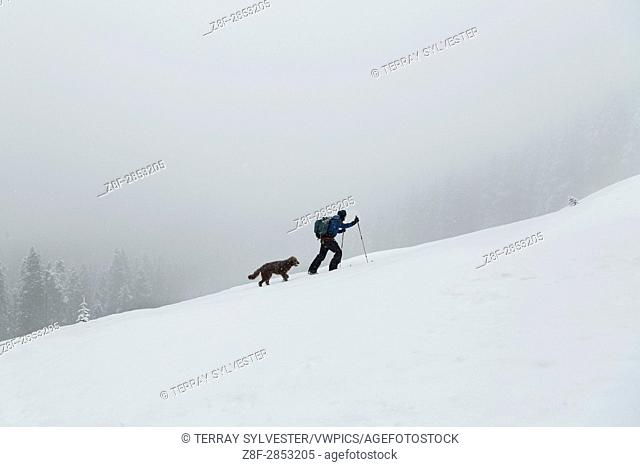A skier and his dog ascending a slope on the flanks of Mount Hood, Oregon, United States